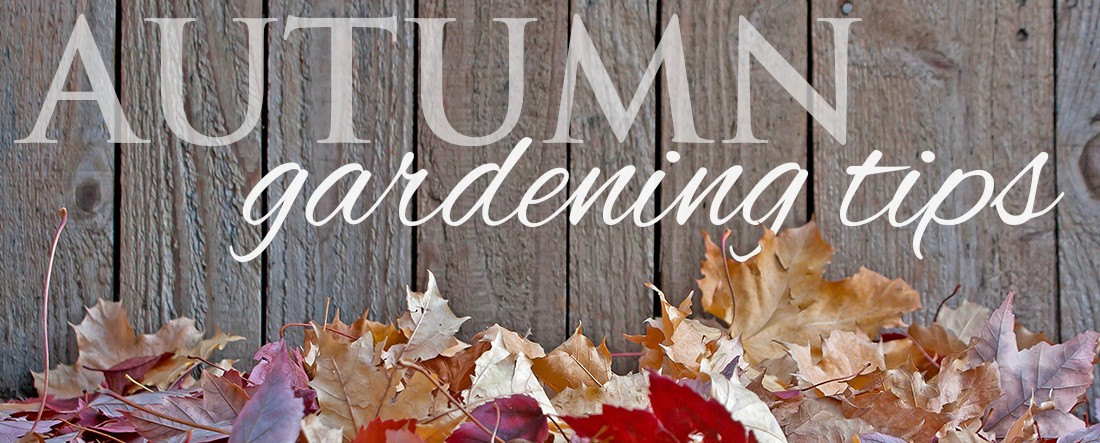 Autumn gardening tips - Autumn plowing time all set for winter ...